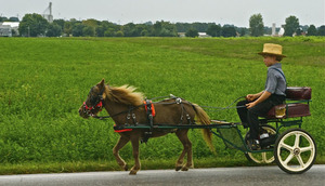 An Amish boy and his buggy in PA Dutch country